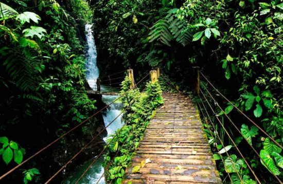 Mindo Cloud Forest Daily Tour